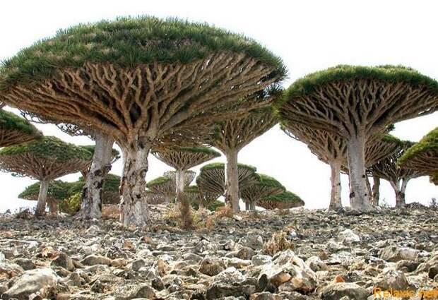 Socotra_009