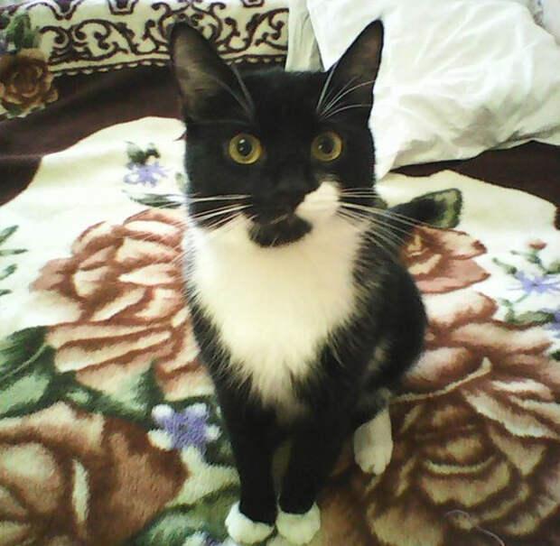 Год назад муж с работы принёс слепого маленького котёнка...