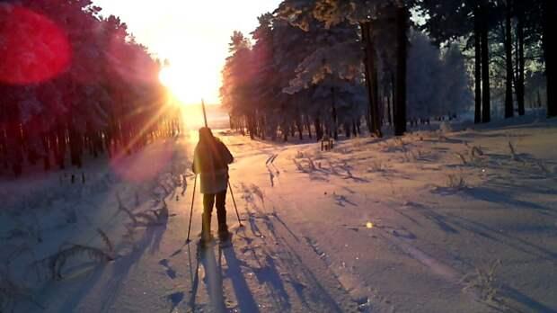 Зимой на лыжа в лесу. Иллюстрация из открытых источников.