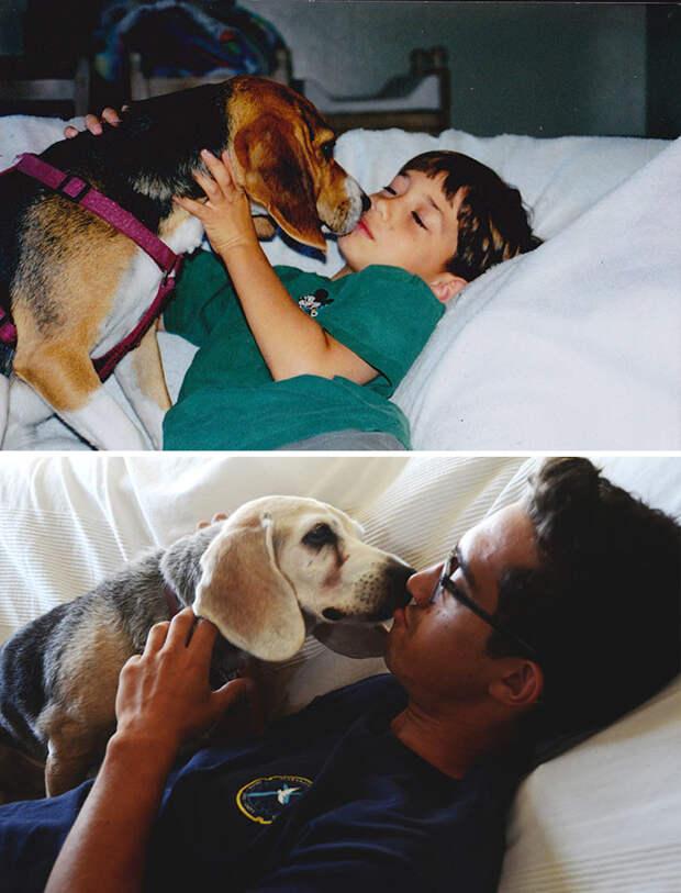 До и после до и после, друзья, собаки, фото