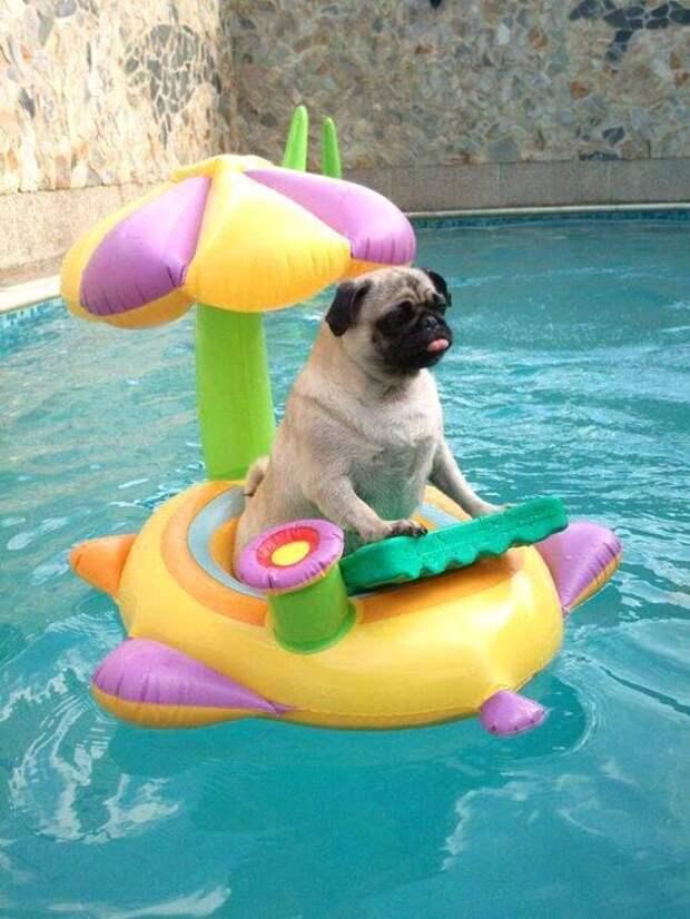 Животные умеют отдыхать летом)