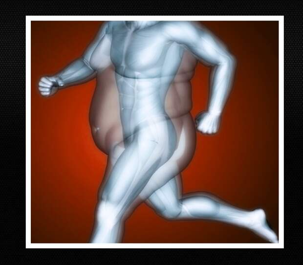 жир в теле