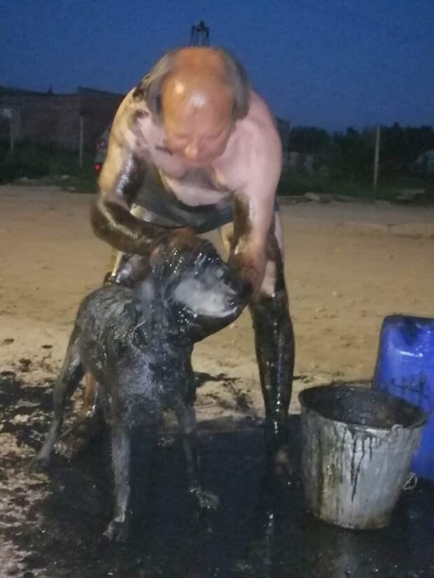 Собак в Тверской области спасли от смерти из колодца с мазутом