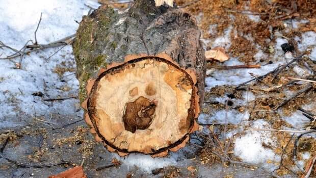 ВВолгограде вырубают деревья влесополосе упоселка Солнечный
