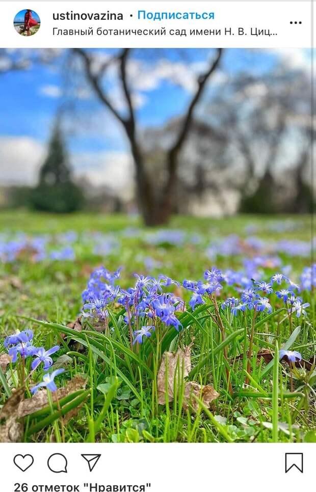 Фото дня: в Ботаническом саду распустились первые весенние цветы