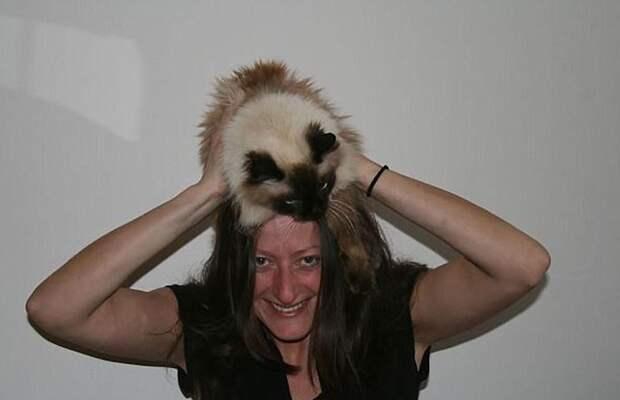 9. Правда, у такой шапки может быть непростой характер Популярность, животные, идея, интернет, кот, фото, шапка