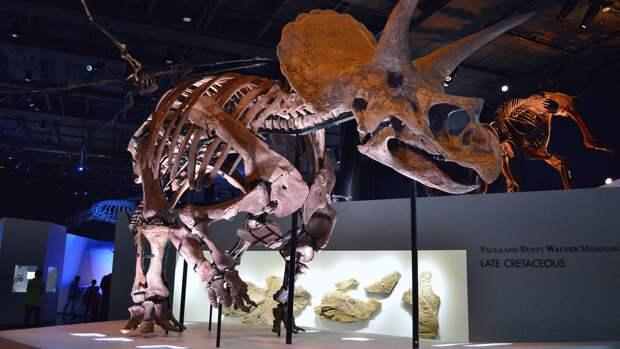 Найденный в Нью-Мексико динозавр оказался самым древним представителем вида цератопсидов