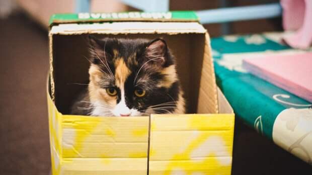 Любовь кошек к иллюзорным коробкам доказана учеными