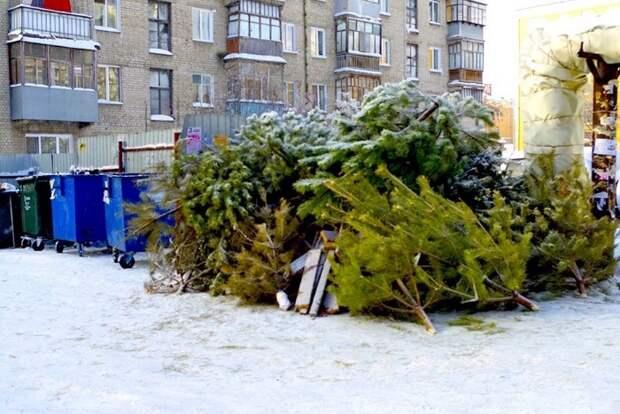 8 идей, как использовать елку после праздников, чтобы не выбрасывать