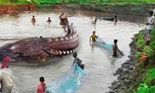 Рыбаки поймали самую большую рыбу в мире