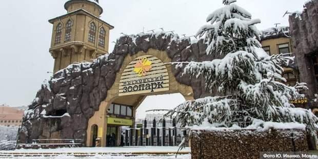 Ушел из жизни президент Московского зоопарка Владимир Спицин