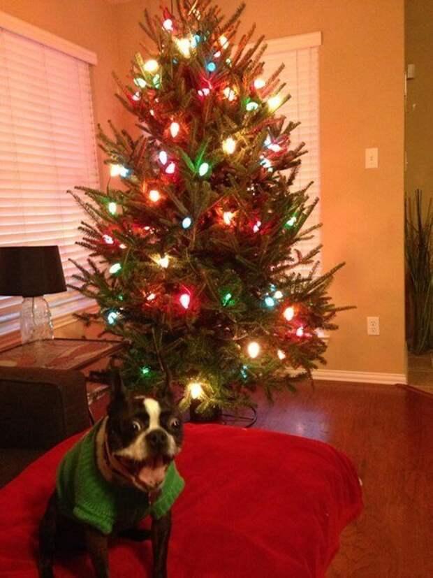 Вот тааакие глаза у Снегурочки животные, не любят, новый год, планы, смешные, фото