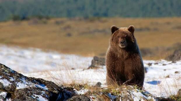 Медведь после спячки
