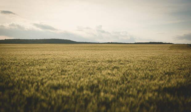 Россельхозбанк обсудил подготовку к весенним полевым работам в Оренбуржье
