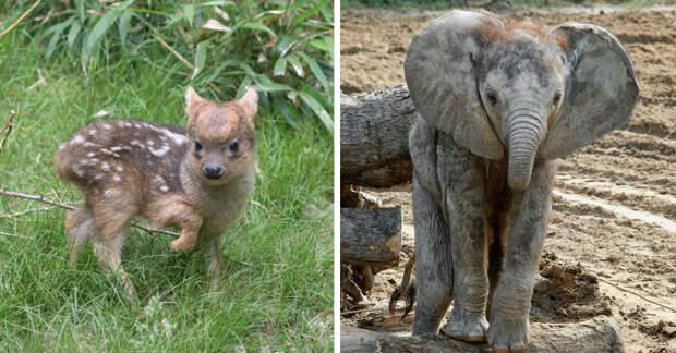 Зоопарки объявили конкурс на самого милого детёныша и вот номинанты!