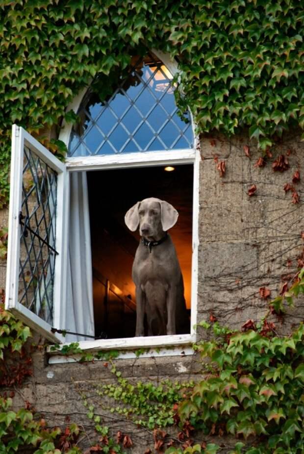 Самые умные породы собак.