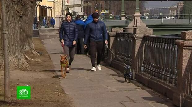 Петербургские депутаты задумались, имеют ли собаки право ходить по магазинам