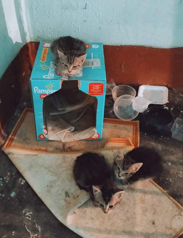 Отчаянно ищут помощь, дом или передержку, 4 маленьких беззащитных детей!