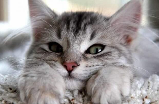10 способов, которыми котейки пытаются сказать вам: «Я тебя люблю!»