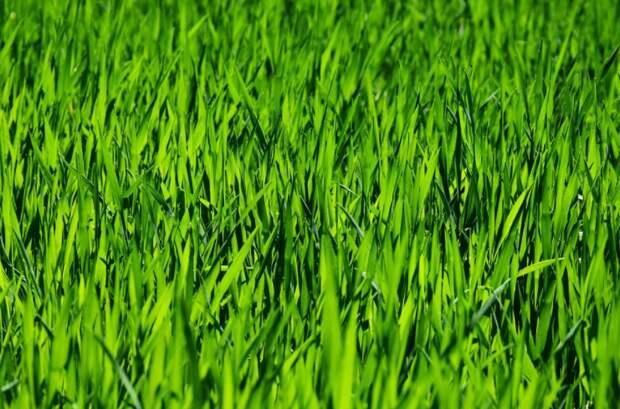 Большинство участников опроса подчеркнули хорошее состояние газонов в Ростокине