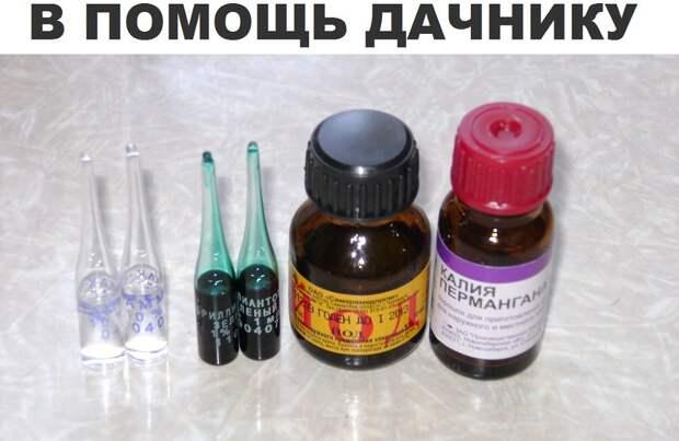Лекарства для растений, которые можно купить в аптеке