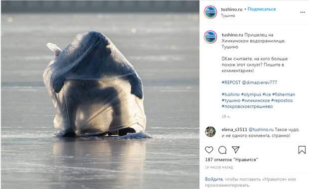 Фото дня: пришелец на льду Химкинского водохранилища