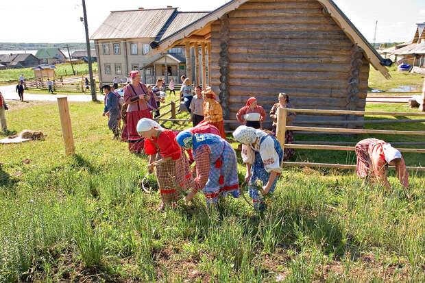 Как собирать травы. Советы народной целительницы