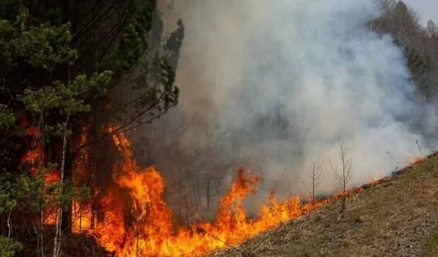 41 лесной иландшафтный пожар произошел засутки вТюменской области