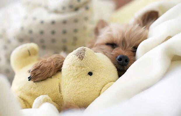 Животные с игрушками
