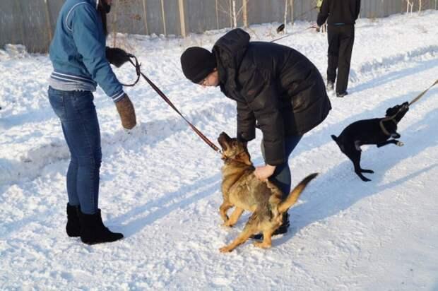 Дети толпой пытались оттащить сбитого пса с дороги дети, пес, сбитая собака, собака
