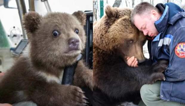 Что стало с медвежонком Мансуром, которого нашли 5 лет назад на аэродроме