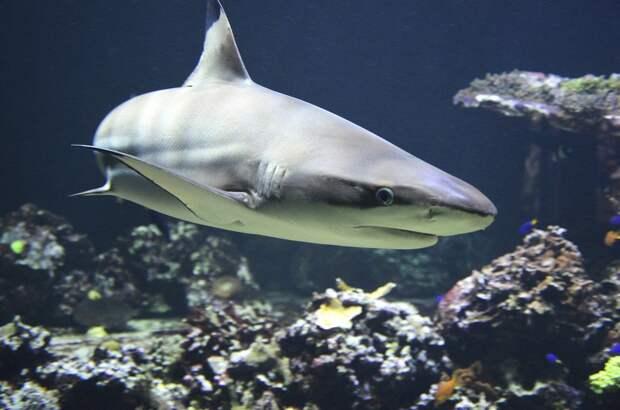 В Австралии мужчина погиб после атаки акулы