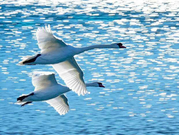 Swan-1-lighter-1-mirror