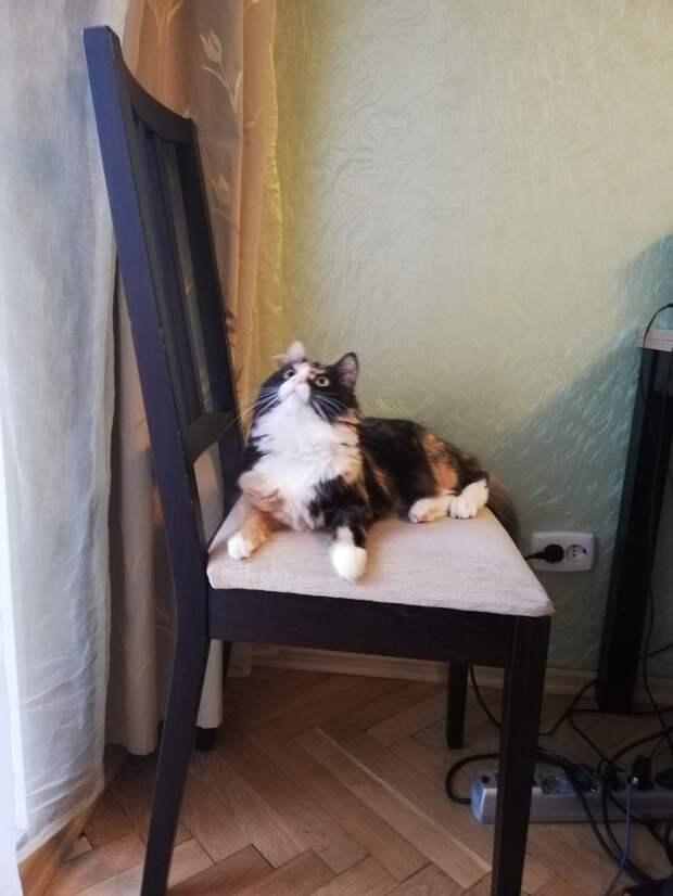 Люди хотели завести котенка, но им везде отказывали. А все потому, что однажды они потеряли свою кошку…