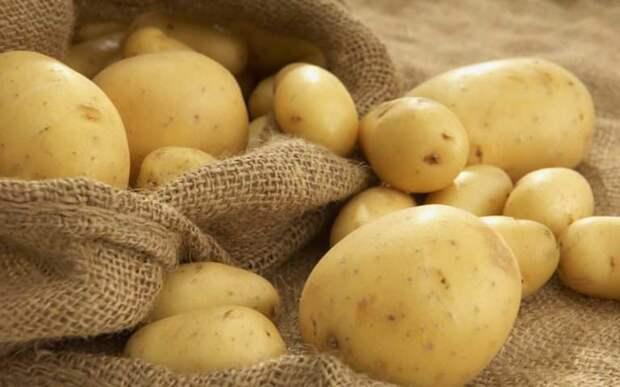 Как правильно выбрать семена овощей. Дачникам на заметку.