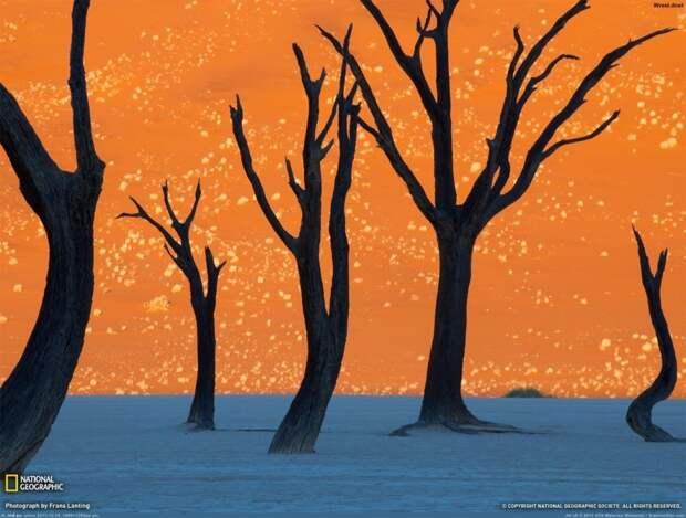 forests31 Леса с другой планеты!