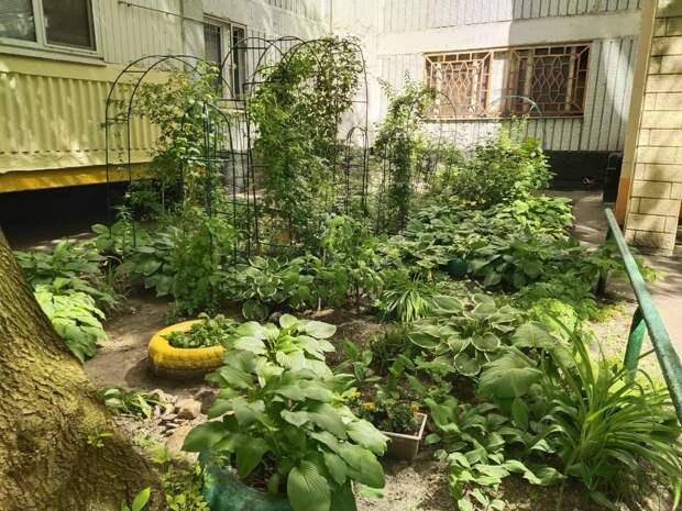 Местные жители попросили озеленить дворы на Яблочкова