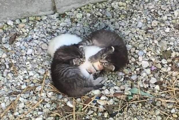 Двое котят лежали, свернувшись в плотный комочек, пытаясь согреть и защитить свою сестричку
