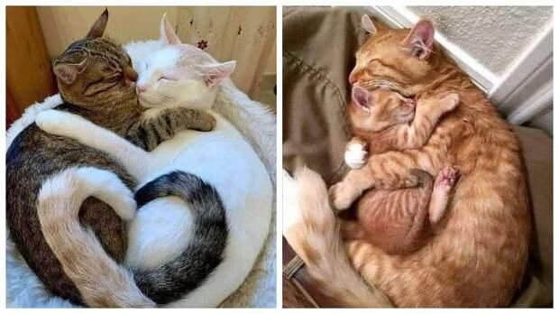 13 фото котов, милота которых зашкаливает