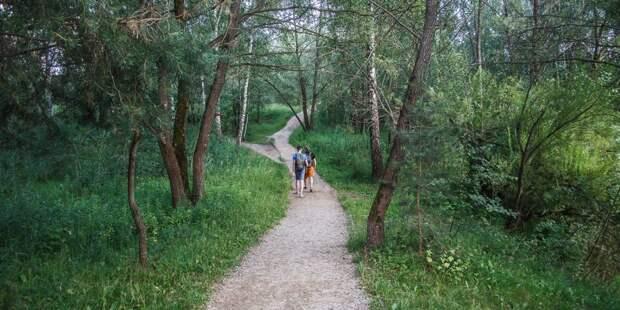 Экотропу в Серебряном бору признали одним из лучших мест для осенних прогулок