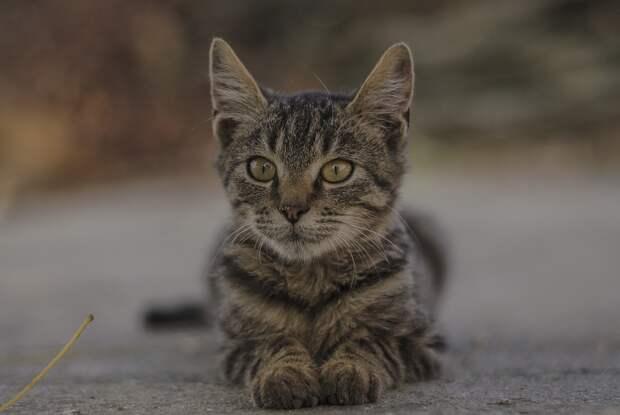В Красноярске женщина-водитель спасла котенка на трассе, чуть не устроив ДТП