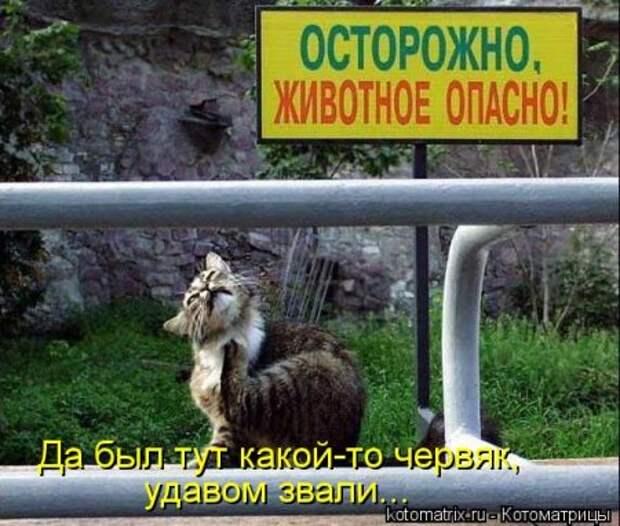 1451492513_kotomatritsa_zv
