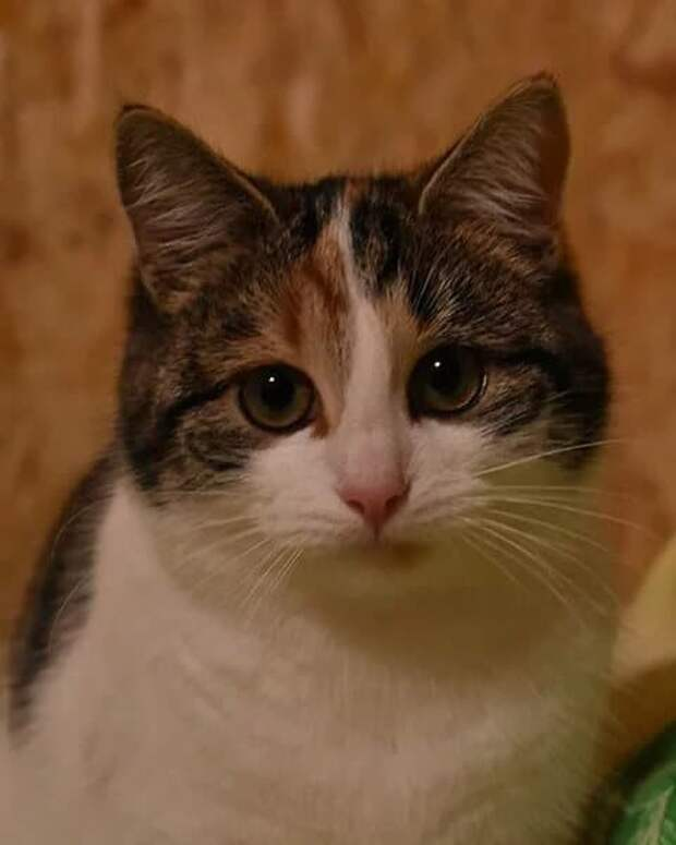 Трёхцветный котёнок сидел под лавкой, и когда он меня увидел, то у него потекли слёзы