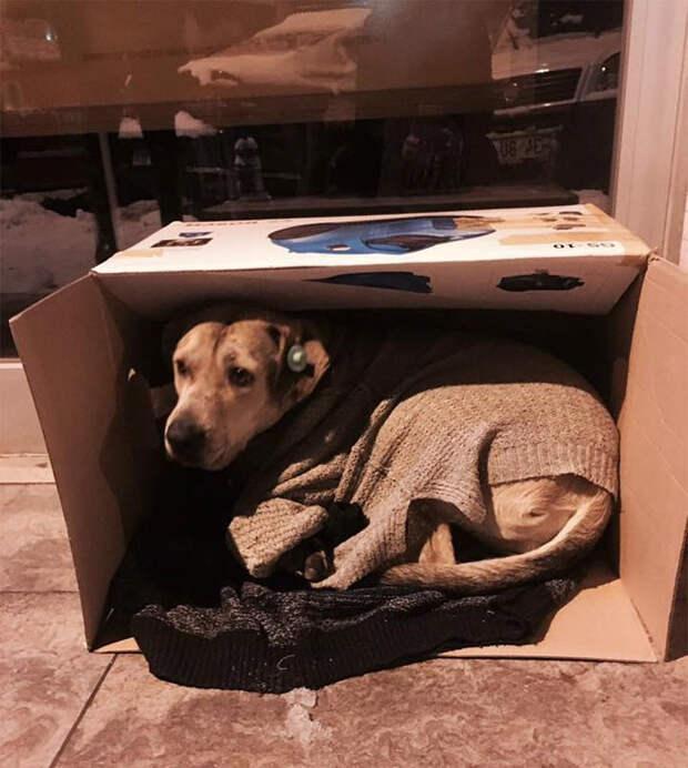Местные жители приносят коробки, теплые вещи и корм для бродячих животных буря, животные, снег, спасение, стамбул