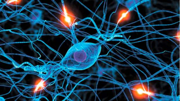 Учёные собираются использовать клетки головного мозга для создания микрочипов