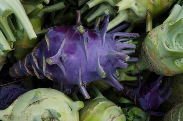 Фиолетовая капуста кольраби