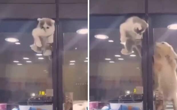 «Я иду, бро»: котенок перелез в вольер к щенку, чтобы он не скучал