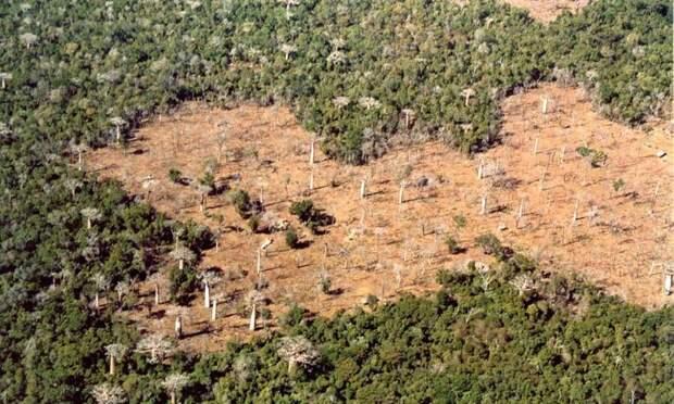 Как на Мадагаскаре спасают оставшиеся леса и восстанавливают утраченные