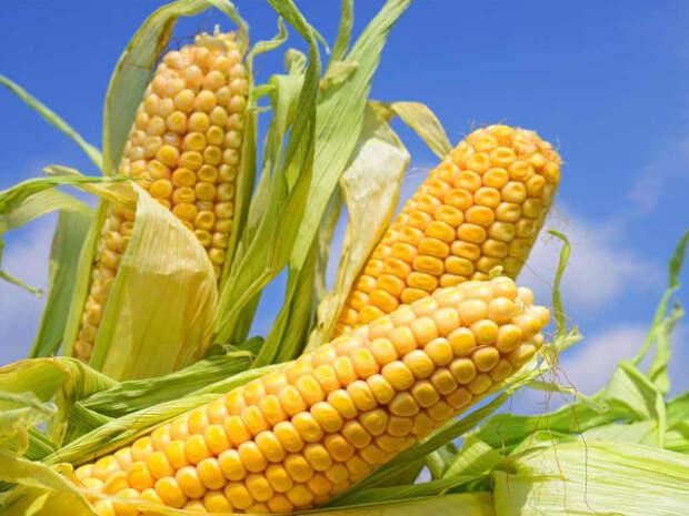 Эксперты: сахар и кукуруза могут ускорить процесс старения