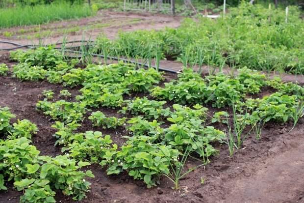 Проверьте грядки: за какие растения на огороде дачники точно получат штраф